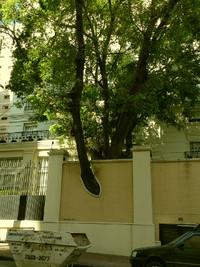 Saopaulotrees2